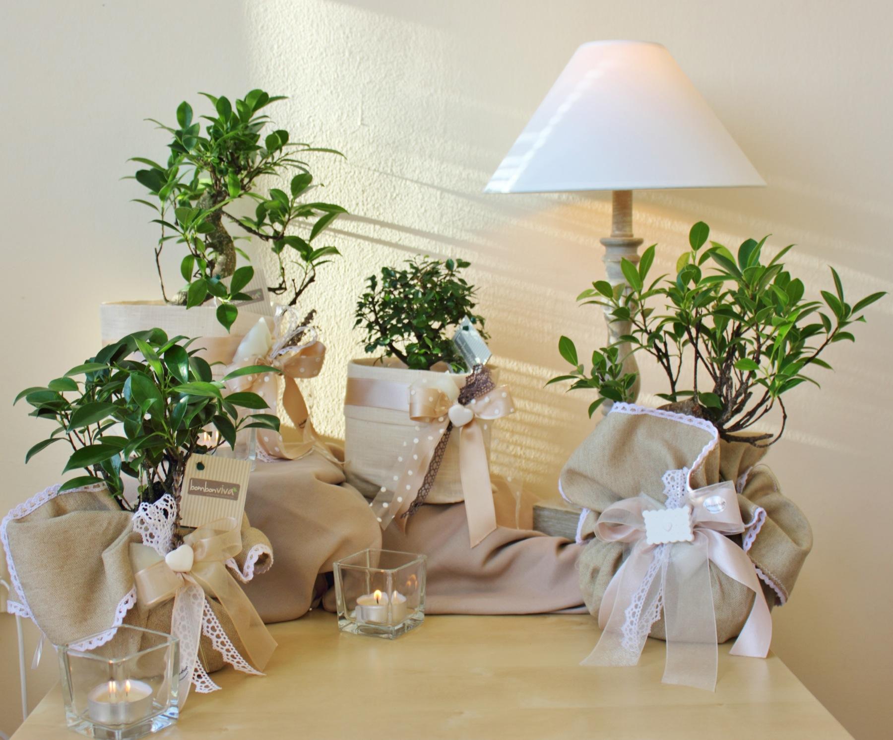 Bombonviv bomboniere bonsai piantine candele for Planimetrie di piccoli cottage con portici