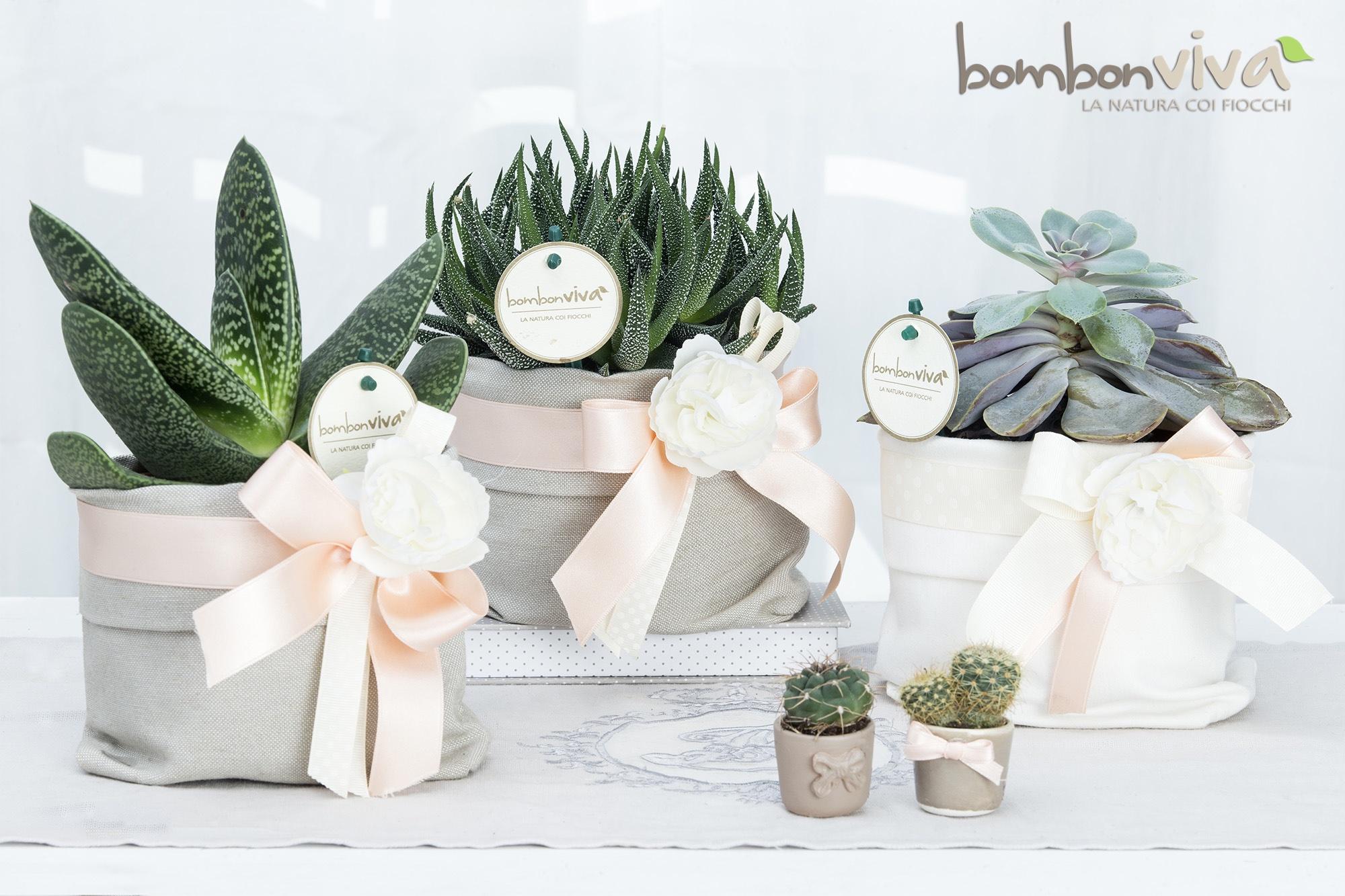 Piante Grasse Piccole Prezzi bombonvivà | bomboniere bonsai, piantine, candele